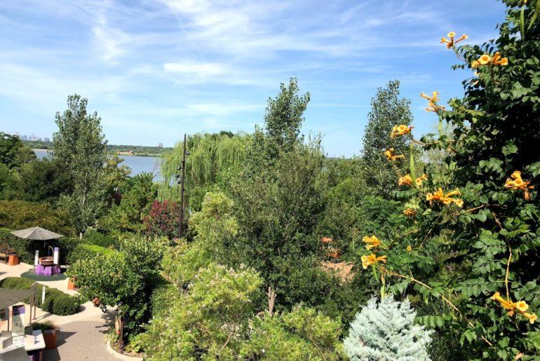 View of treetops at Dallas Arboretum