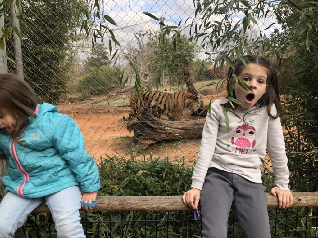a girl looks surprised by the tiger behind her at the OKC zoo