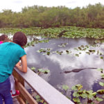 Mom and kids look at a swimming alligator in Everglades National Park