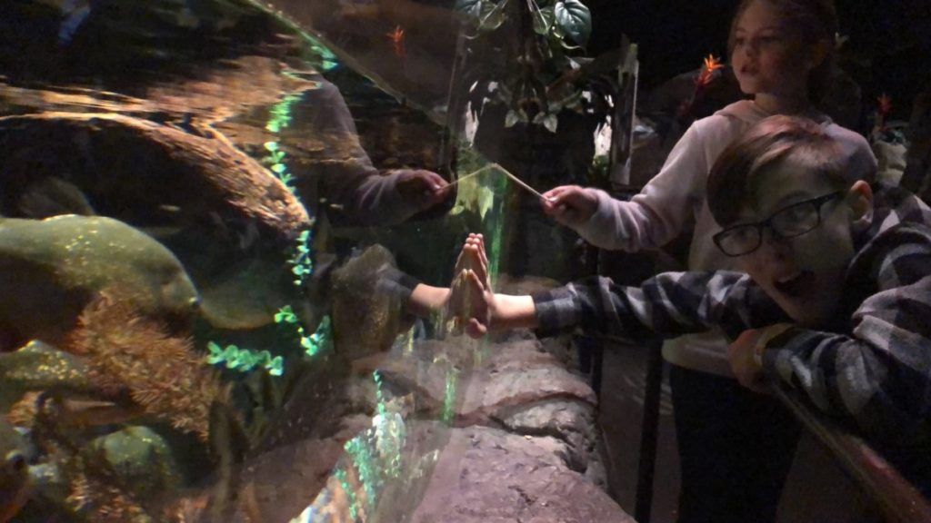 A boy and sister touch a fish tank at SeaLife Aquarium in the Mall of America Minneapolis