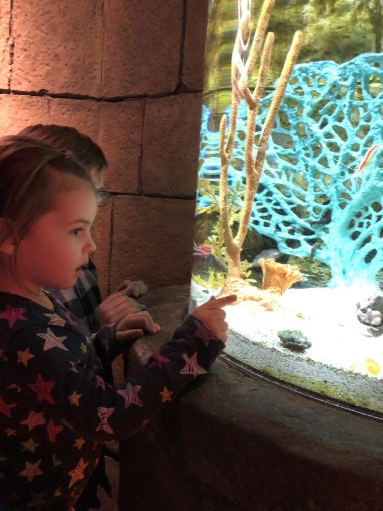 A toddler looks at fish in the SeaLife Aquarium at the Mall of the America in Minneappolis
