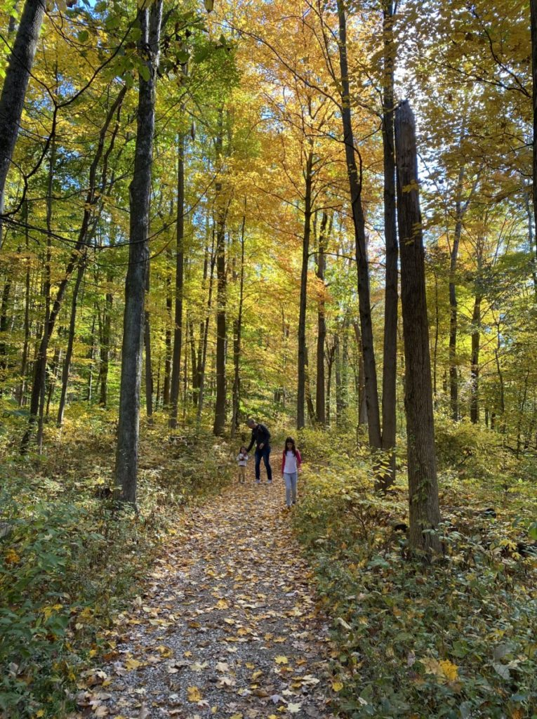 Child walk on a path through Pine Grove Trail in Cuyahoga Valley National Park with yellow and green leaves
