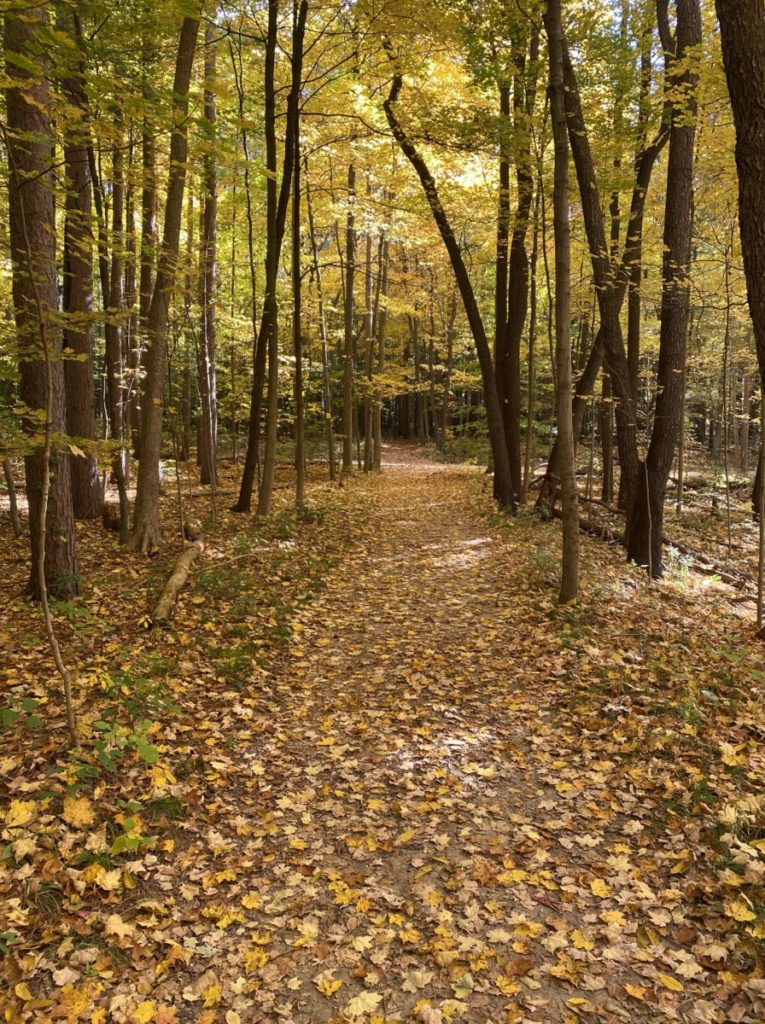Yellow leaves cover the path in Cuyahoga Valley National Park Pine Grove Trail