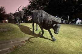 2 long horn Cattle statues at Central Park in Frisco Texas
