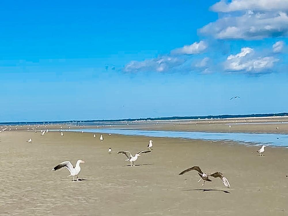 Seagulls land on Cape Cod Beach in Massachussetts