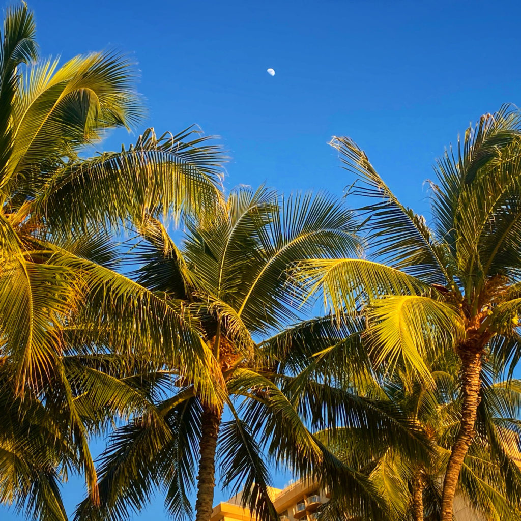 Palm tree with blue sky background and the moon