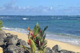 Hawaii plants and beach